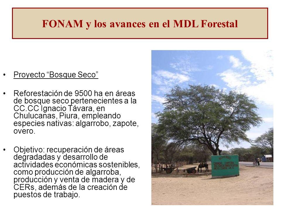 Proyecto Bosque Seco Reforestación de 9500 ha en áreas de bosque seco pertenecientes a la CC.CC Ignacio Távara, en Chulucanas, Piura, empleando especies nativas: algarrobo, zapote, overo.