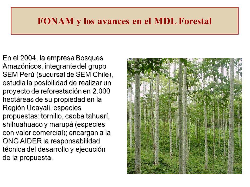 En el 2004, la empresa Bosques Amazónicos, integrante del grupo SEM Perú (sucursal de SEM Chile), estudia la posibilidad de realizar un proyecto de reforestación en 2.000 hectáreas de su propiedad en la Región Ucayali, especies propuestas: tornillo, caoba tahuarí, shihuahuaco y marupá (especies con valor comercial); encargan a la ONG AIDER la responsabilidad técnica del desarrollo y ejecución de la propuesta.