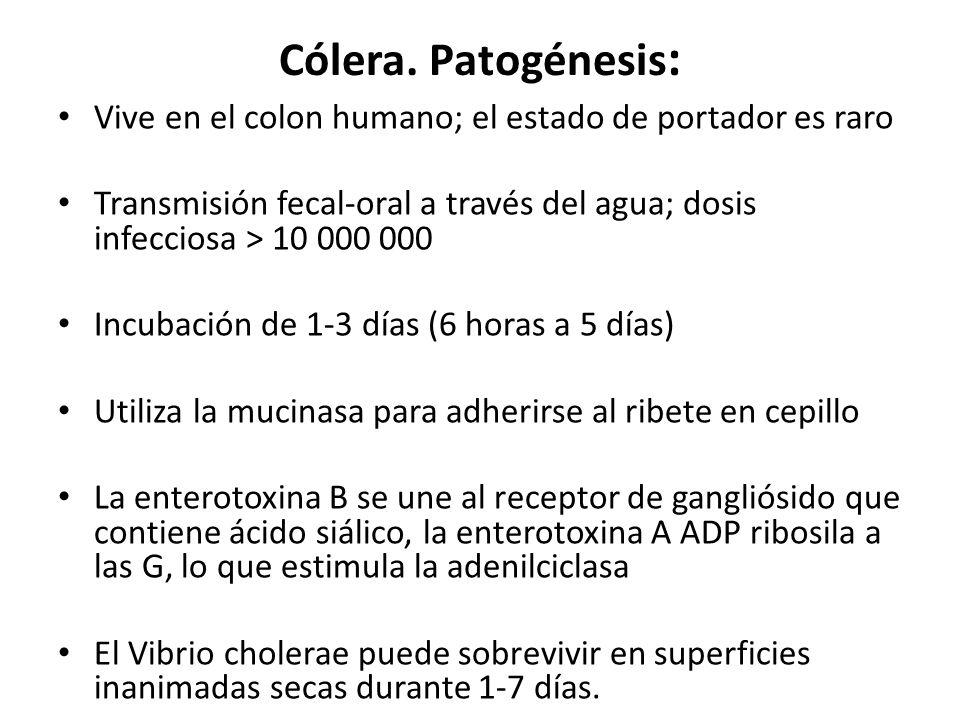 Cólera. Patogénesis : Vive en el colon humano; el estado de portador es raro Transmisión fecal-oral a través del agua; dosis infecciosa > 10 000 000 I