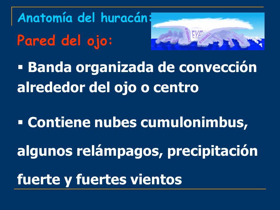 Anatomía del huracán: Pared del ojo: Banda organizada de convección alrededor del ojo o centro Contiene nubes cumulonimbus, algunos relámpagos, precip