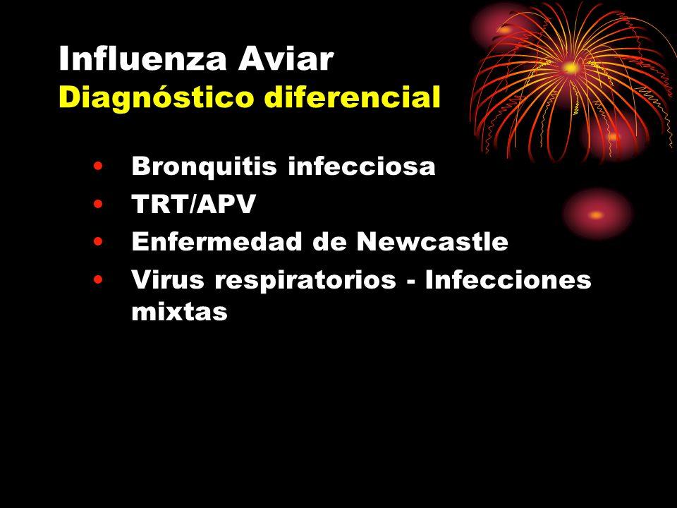 Influenza Aviar Diagnóstico diferencial Bronquitis infecciosa TRT/APV Enfermedad de Newcastle Virus respiratorios - Infecciones mixtas
