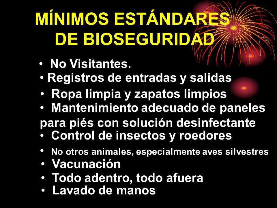 MÍNIMOS ESTÁNDARES DE BIOSEGURIDAD No Visitantes. Registros de entradas y salidas Ropa limpia y zapatos limpios Mantenimiento adecuado de paneles para