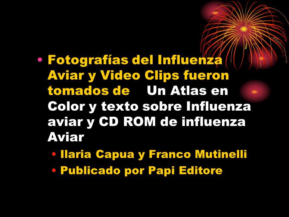 Fotografías del Influenza Aviar y Video Clips fueron tomados de Un Atlas en Color y texto sobre Influenza aviar y CD ROM de influenza Aviar Ilaria Cap