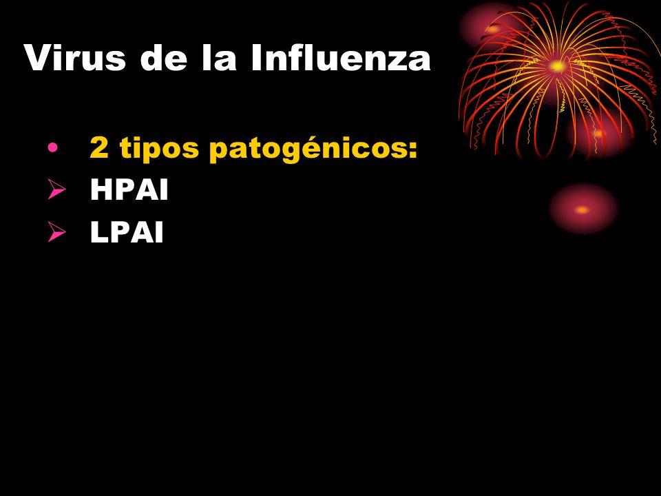 BENEFICIOS DE LA BIOSEGURIDAD AYUDA A DEJAR FUERA A LA enfermedad REDUCE EL RIESGO de enfermedades zoonóticas LIMITA LA DISEMINACIÓN de la enfermedad AYUDA A PROTEGER la salud pública MEJORA la salud global de la bandada DISMINUYE LOS COSTOS de tratamiento de la enfermedad REDUCE PÉRDIDAS y mejora la rentabilidad MEJOR BIOSEGURIDAD OFRECE : paz mental, saludable bandada y un negocio más viable!