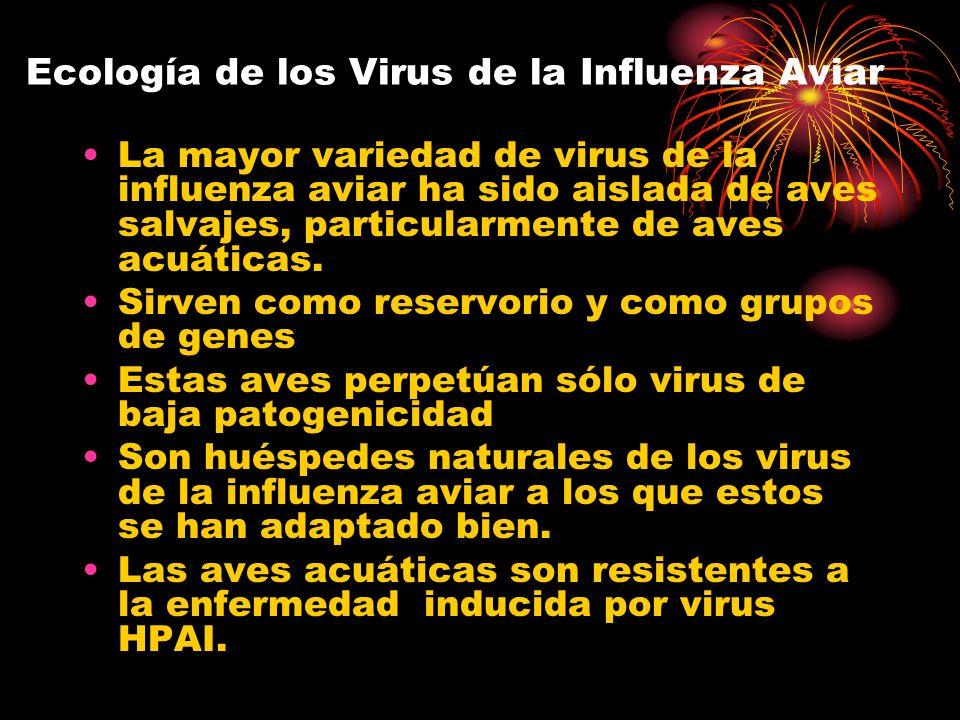 Ecología de los Virus de la Influenza Aviar La mayor variedad de virus de la influenza aviar ha sido aislada de aves salvajes, particularmente de aves