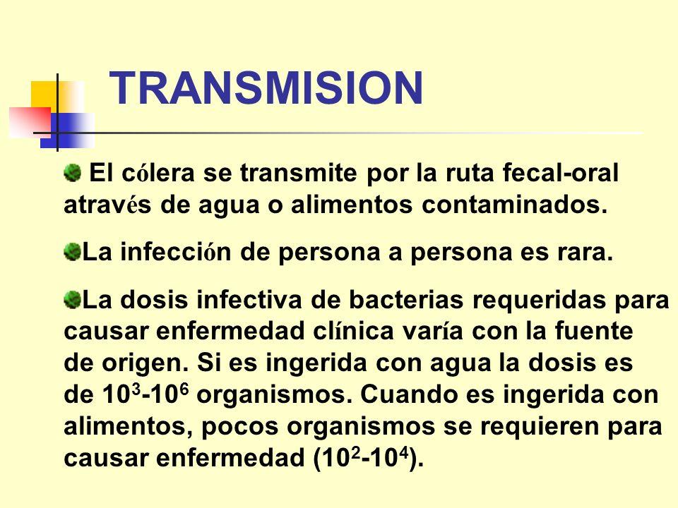 TRANSMISION El c ó lera se transmite por la ruta fecal-oral atrav é s de agua o alimentos contaminados. La infecci ó n de persona a persona es rara. L