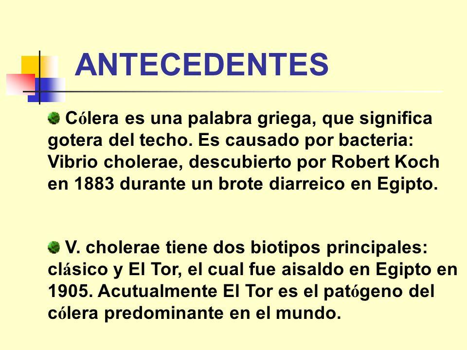 ANTECEDENTES C ó lera es una palabra griega, que significa gotera del techo. Es causado por bacteria: Vibrio cholerae, descubierto por Robert Koch en
