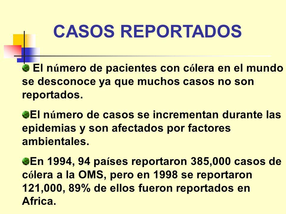 CASOS REPORTADOS El n ú mero de pacientes con c ó lera en el mundo se desconoce ya que muchos casos no son reportados. El n ú mero de casos se increme