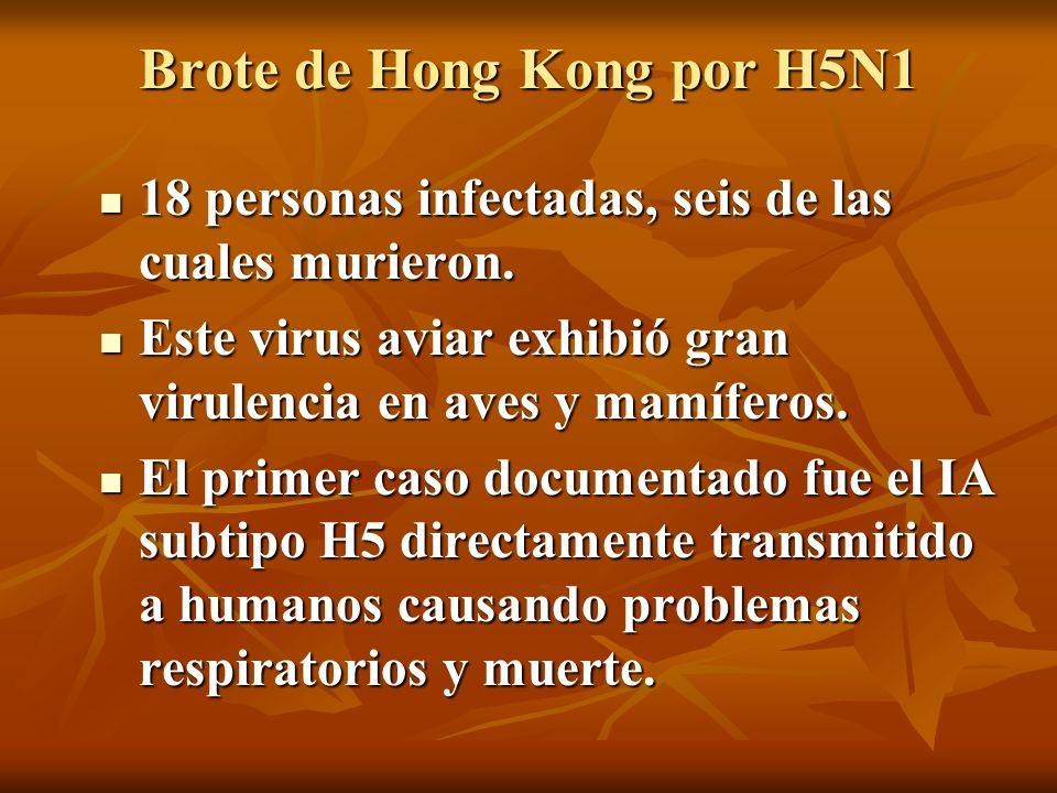 Brote de Hong Kong por H5N1 18 personas infectadas, seis de las cuales murieron. 18 personas infectadas, seis de las cuales murieron. Este virus aviar