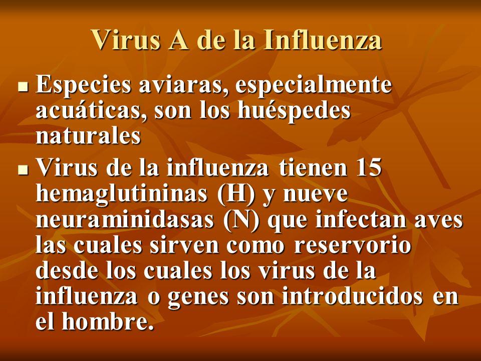 Virus A de la Influenza Especies aviaras, especialmente acuáticas, son los huéspedes naturales Especies aviaras, especialmente acuáticas, son los hués