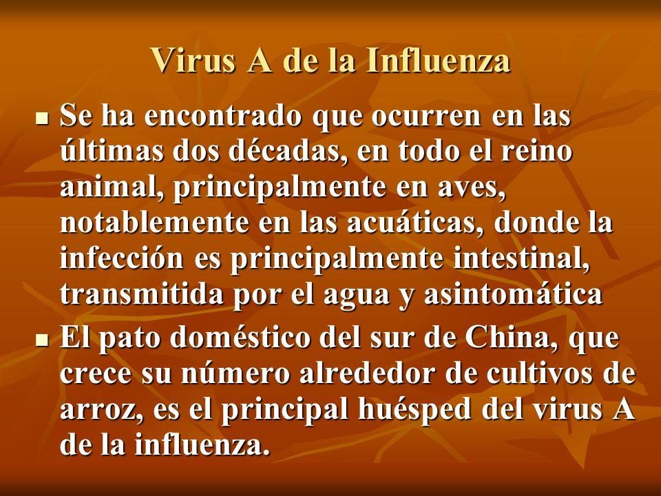 Virus A de la Influenza Se ha encontrado que ocurren en las últimas dos décadas, en todo el reino animal, principalmente en aves, notablemente en las