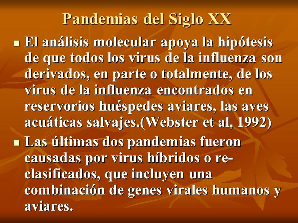 Pandemias del Siglo XX El análisis molecular apoya la hipótesis de que todos los virus de la influenza son derivados, en parte o totalmente, de los vi
