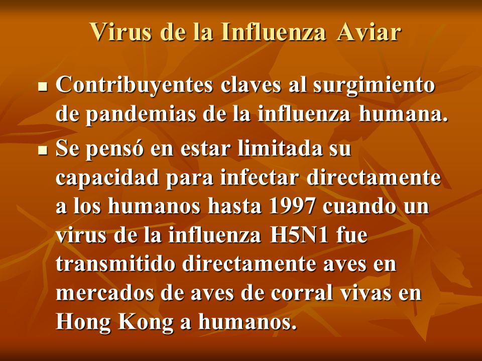 Virus de la Influenza Aviar Contribuyentes claves al surgimiento de pandemias de la influenza humana. Contribuyentes claves al surgimiento de pandemia
