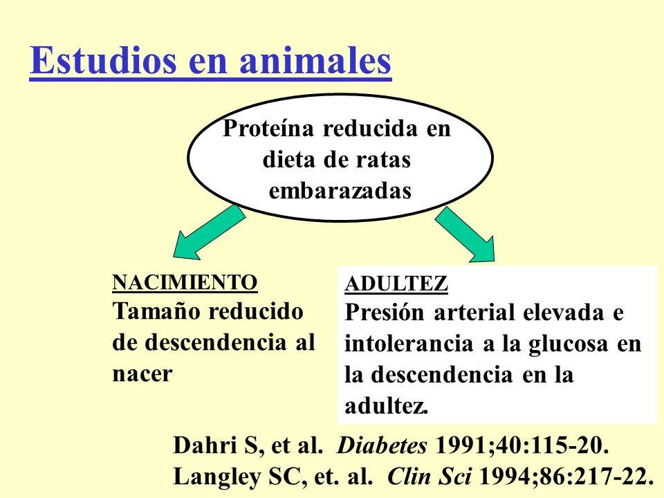 Estudios en animales NACIMIENTO Tamaño reducido de descendencia al nacer ADULTEZ Presión arterial elevada e intolerancia a la glucosa en la descendenc