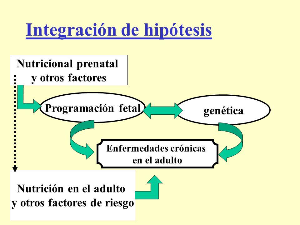 Integración de hipótesis Programación fetal genética Nutricional prenatal y otros factores Nutrición en el adulto y otros factores de riesgo Enfermeda