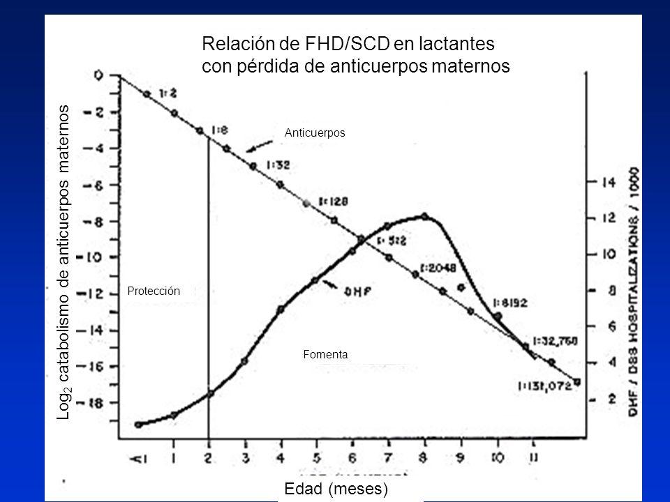 Edad (meses) Log 2 catabolismo de anticuerpos maternos Protección Fomenta Relación de FHD/SCD en lactantes con pérdida de anticuerpos maternos Anticue