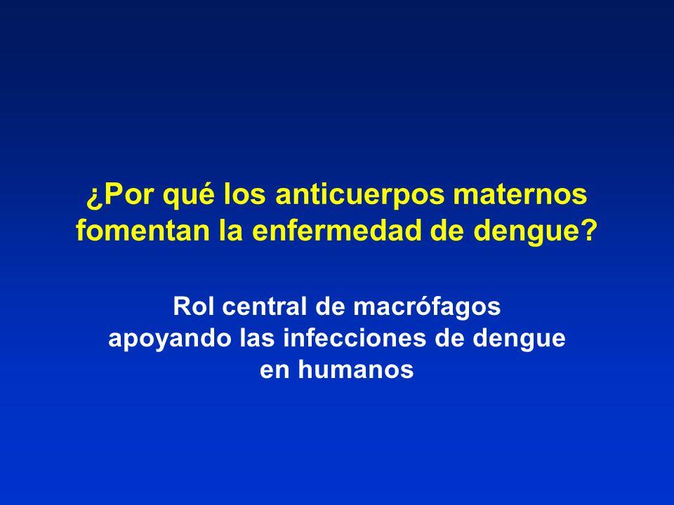 ¿Por qué los anticuerpos maternos fomentan la enfermedad de dengue? Rol central de macrófagos apoyando las infecciones de dengue en humanos