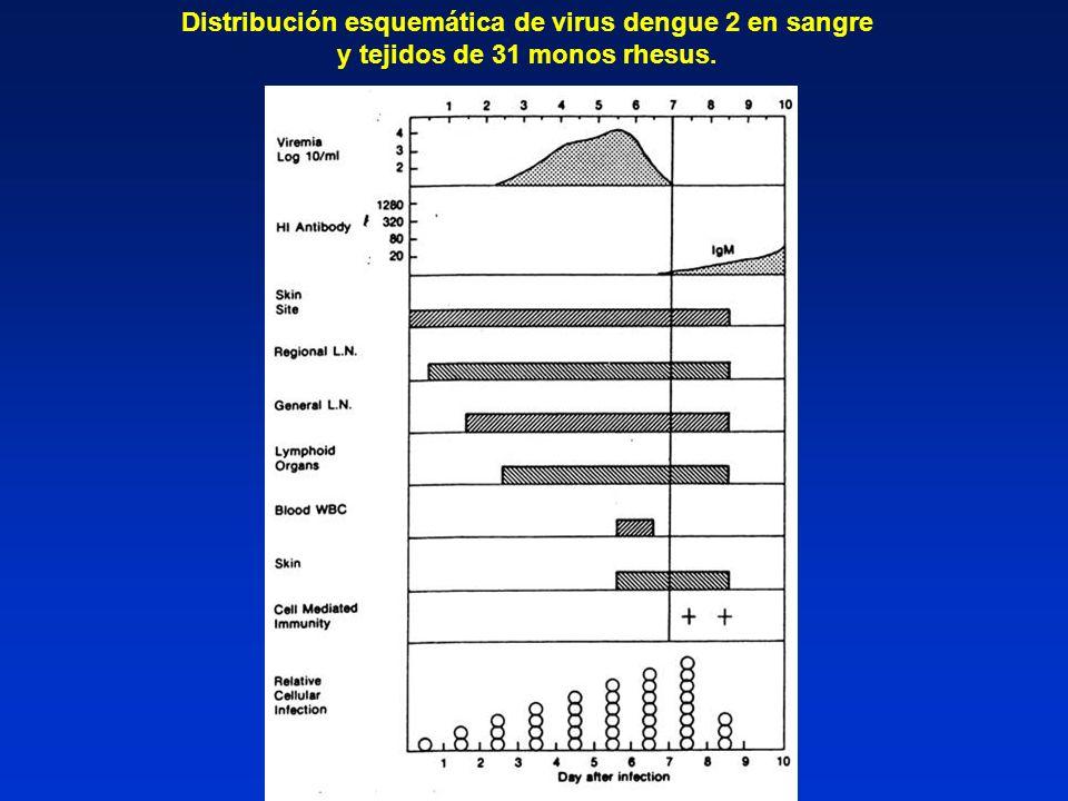 Distribución esquemática de virus dengue 2 en sangre y tejidos de 31 monos rhesus.