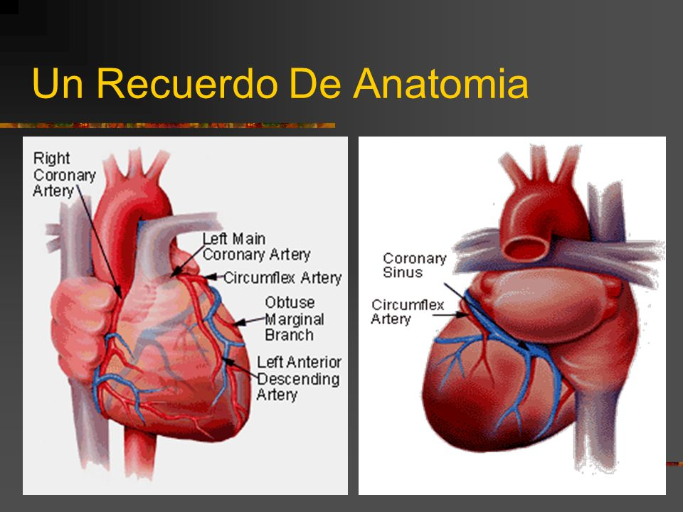 Un Recuerdo De Anatomia