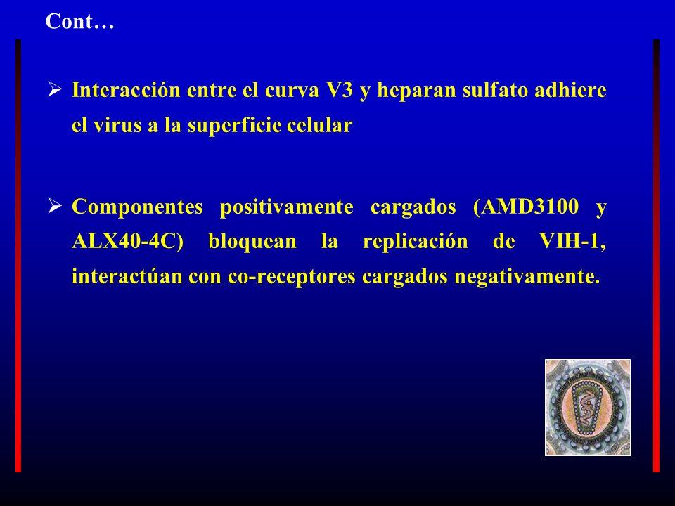 Interacción entre el curva V3 y heparan sulfato adhiere el virus a la superficie celular Componentes positivamente cargados (AMD3100 y ALX40-4C) bloqu