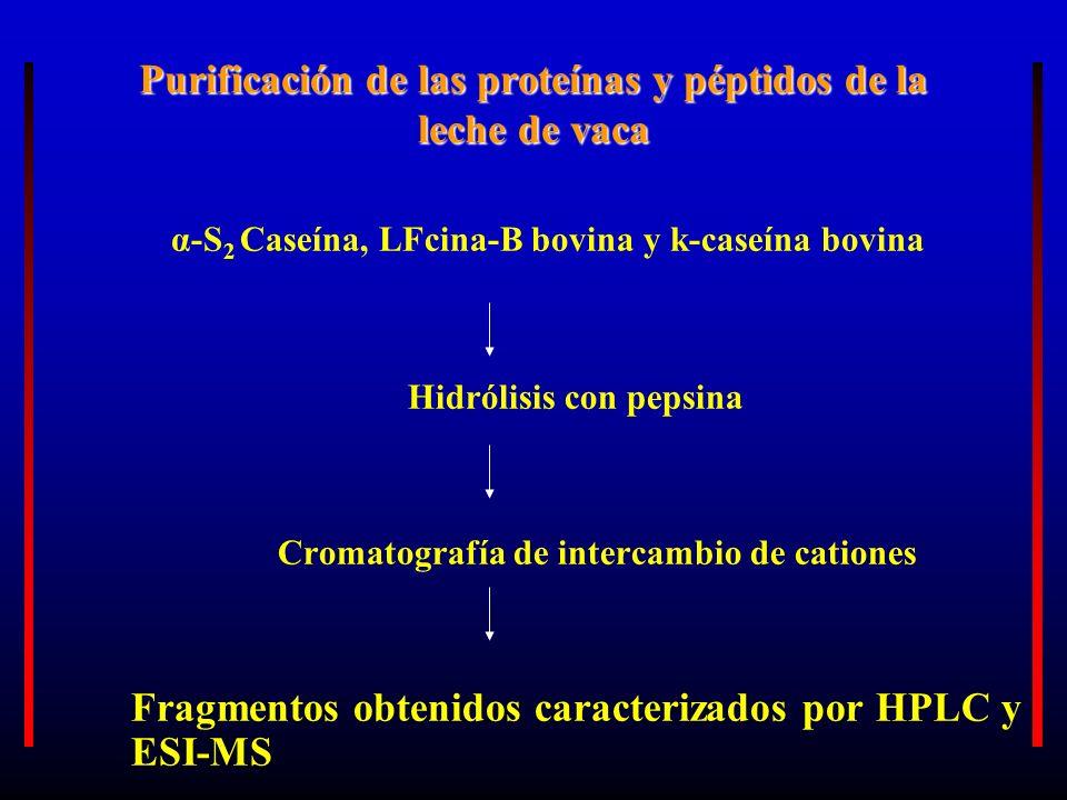 Purificación de las proteínas y péptidos de la leche de vaca α-S 2 Caseína, LFcina-B bovina y k-caseína bovina Hidrólisis con pepsina Cromatografía de