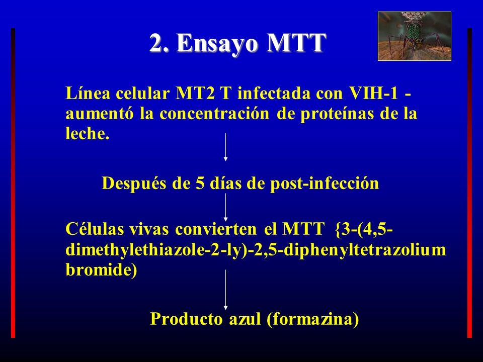2. Ensayo MTT Línea celular MT2 T infectada con VIH-1 - aumentó la concentración de proteínas de la leche. Después de 5 días de post-infección Células