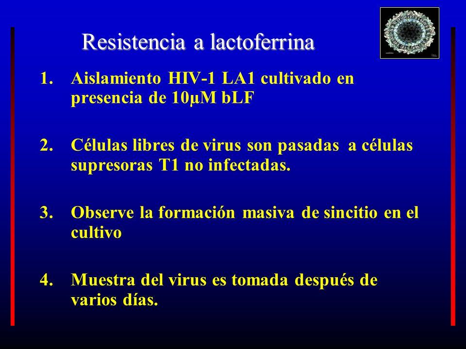 Resistencia a lactoferrina 1.Aislamiento HIV-1 LA1 cultivado en presencia de 10µM bLF 2.Células libres de virus son pasadas a células supresoras T1 no