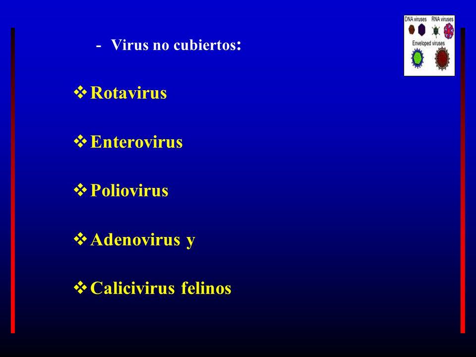 -Virus no cubiertos : Rotavirus Enterovirus Poliovirus Adenovirus y Calicivirus felinos