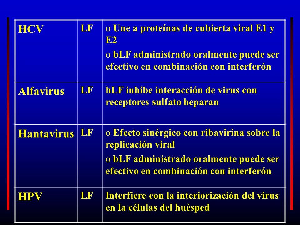 HCV LFo Une a proteínas de cubierta viral E1 y E2 o bLF administrado oralmente puede ser efectivo en combinación con interferón Alfavirus LFhLF inhibe