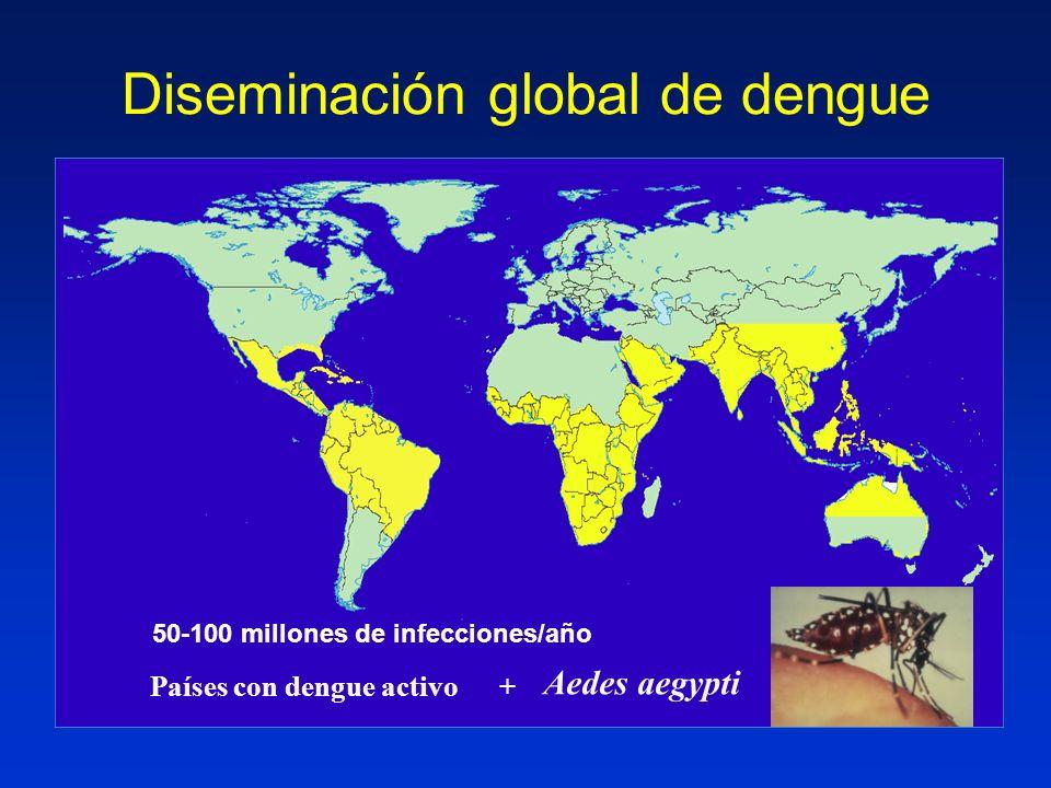 Diseminación global de dengue Países con dengue activo + Aedes aegypti 50-100 millones de infecciones/año