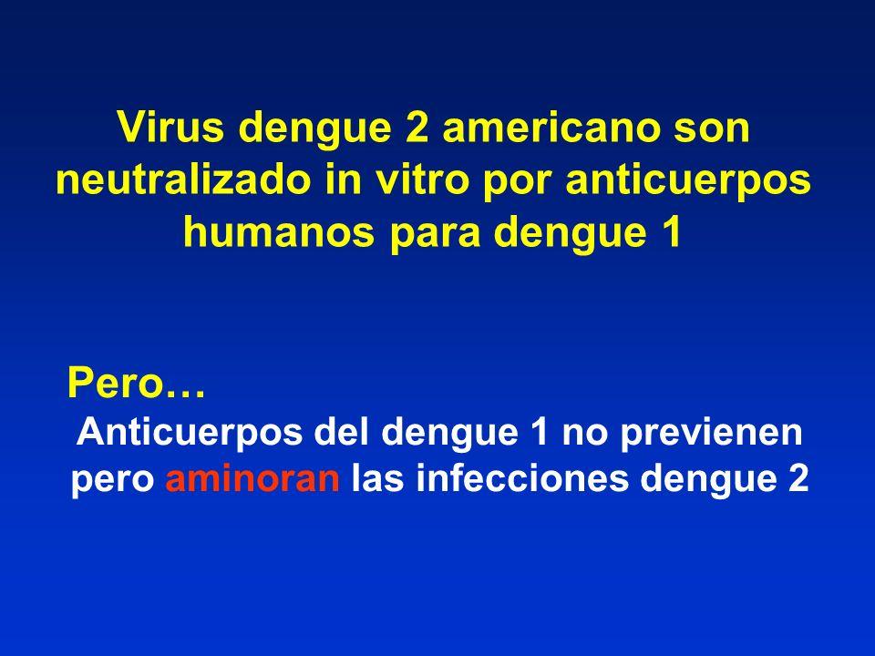 Virus dengue 2 americano son neutralizado in vitro por anticuerpos humanos para dengue 1 Pero… Anticuerpos del dengue 1 no previenen pero aminoran las