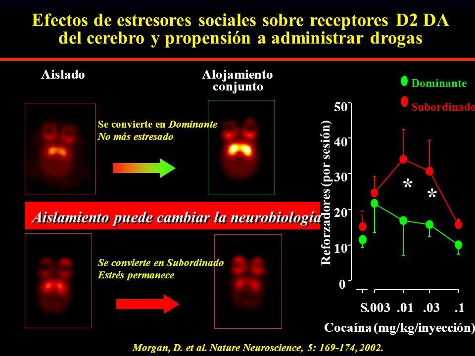 Se convierte en Subordinado Estrés permanece AisladoAlojamiento conjunto Morgan, D. et al. Nature Neuroscience, 5: 169-174, 2002. * * S.003.01.03.1 0