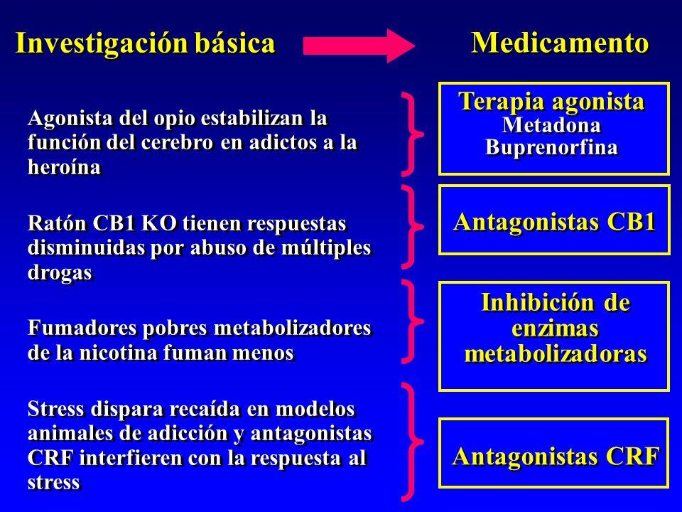 Agonista del opio estabilizan la función del cerebro en adictos a la heroína Ratón CB1 KO tienen respuestas disminuidas por abuso de múltiples drogas