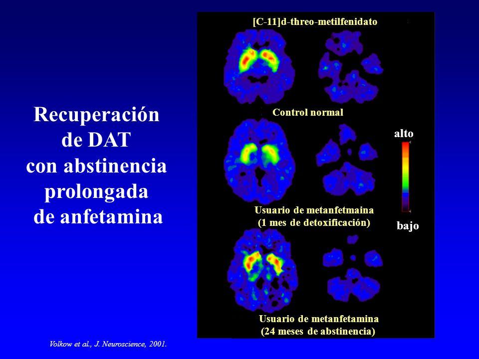 Recuperación de DAT con abstinencia prolongada de anfetamina [C-11]d-threo-metilfenidato Volkow et al., J. Neuroscience, 2001. bajo alto Control norma