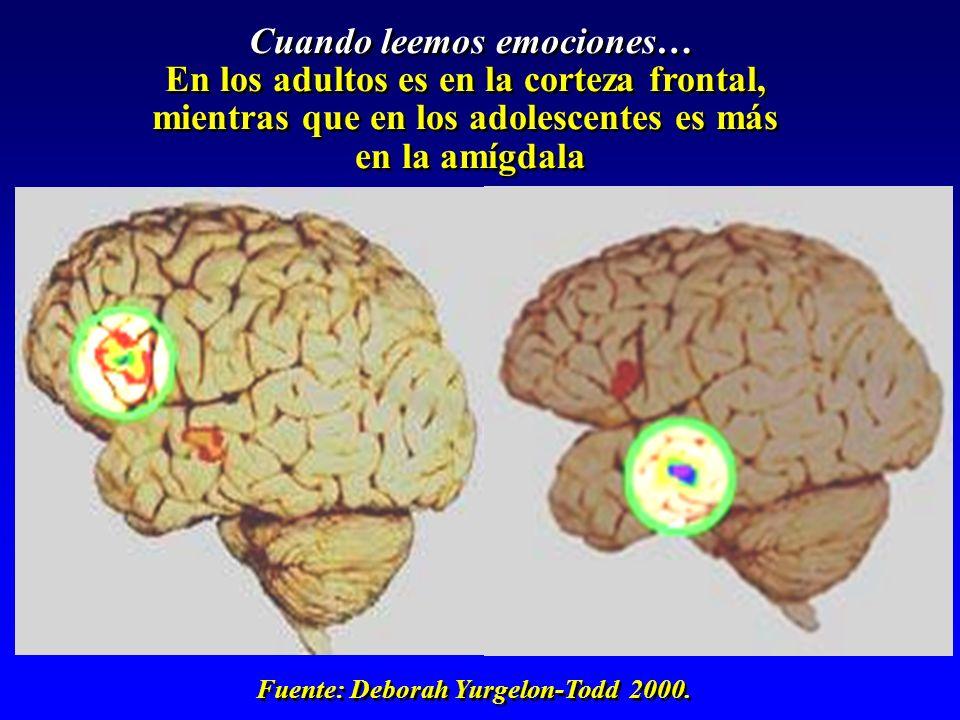 Cuando leemos emociones… En los adultos es en la corteza frontal, mientras que en los adolescentes es más en la amígdala Cuando leemos emociones… En l
