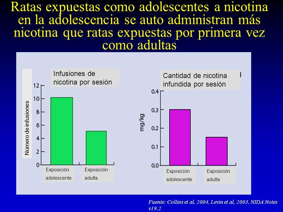 Ratas expuestas como adolescentes a nicotina en la adolescencia se auto administran más nicotina que ratas expuestas por primera vez como adultas Fuen