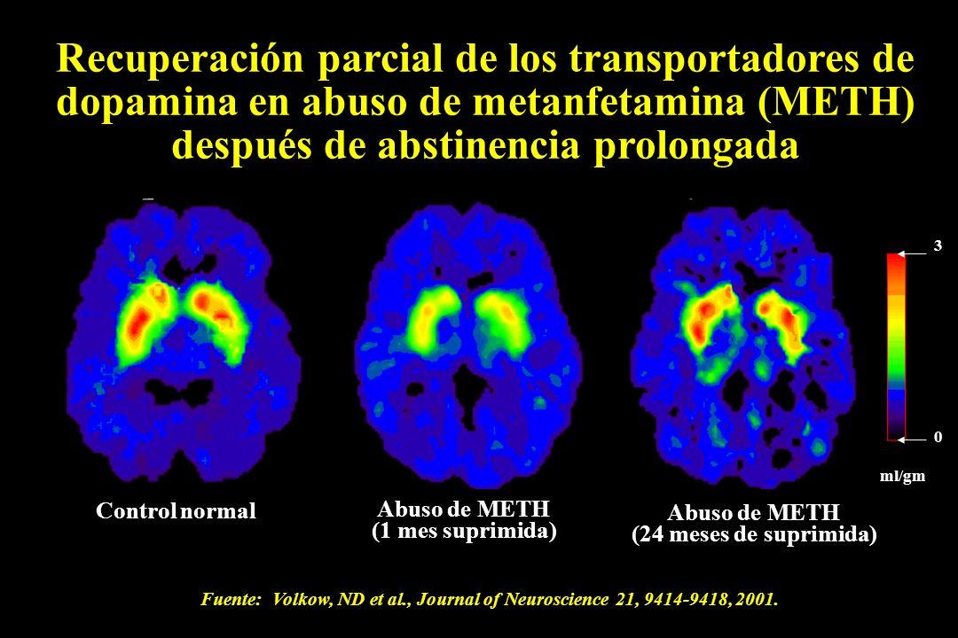 Recuperación parcial de los transportadores de dopamina en abuso de metanfetamina (METH) después de abstinencia prolongada Control normal Abuso de MET