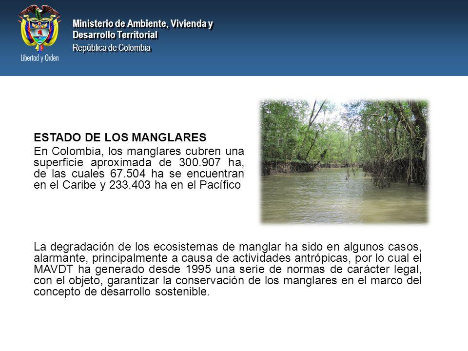 Ministerio de Ambiente, Vivienda y Desarrollo Territorial República de Colombia Ministerio de Ambiente, Vivienda y Desarrollo Territorial República de Colombia ESTADO DE LOS MANGLARES En Colombia, los manglares cubren una superficie aproximada de 300.907 ha, de las cuales 67.504 ha se encuentran en el Caribe y 233.403 ha en el Pacífico La degradación de los ecosistemas de manglar ha sido en algunos casos, alarmante, principalmente a causa de actividades antrópicas, por lo cual el MAVDT ha generado desde 1995 una serie de normas de carácter legal, con el objeto, garantizar la conservación de los manglares en el marco del concepto de desarrollo sostenible.