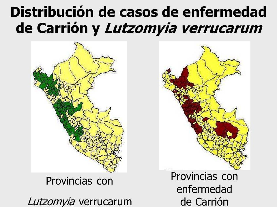 Provincias con Lutzomyia verrucarum Provincias con enfermedad de Carrión Distribución de casos de enfermedad de Carrión y Lutzomyia verrucarum