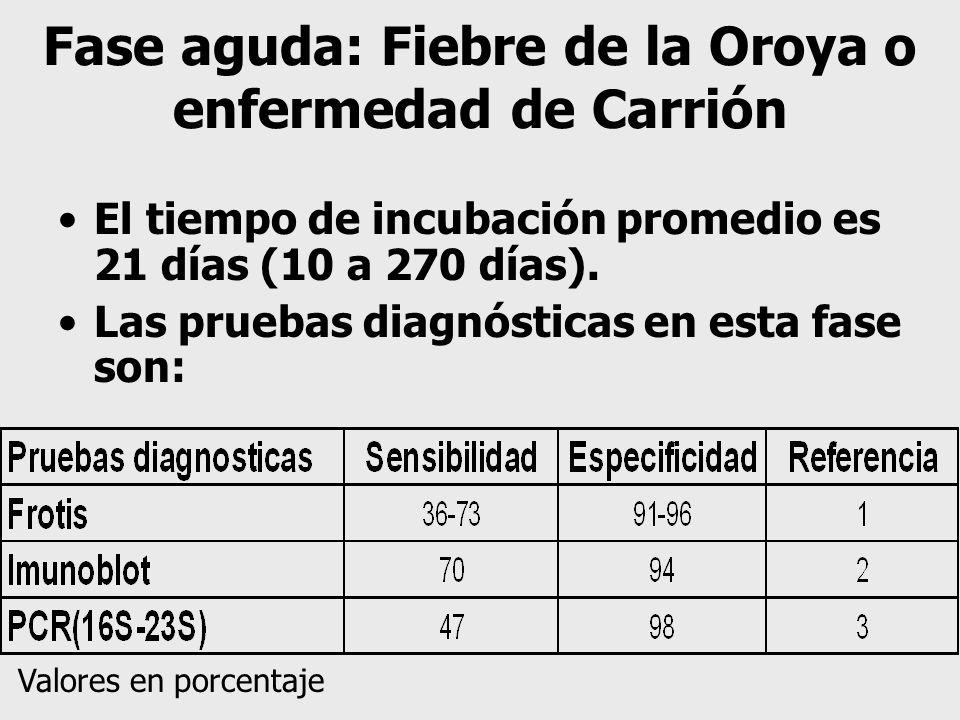 Fase aguda: Fiebre de la Oroya o enfermedad de Carrión El tiempo de incubación promedio es 21 días (10 a 270 días). Las pruebas diagnósticas en esta f