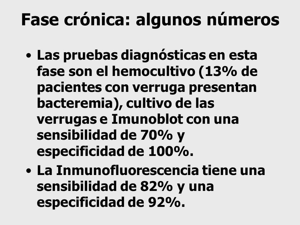 Fase crónica: algunos números Las pruebas diagnósticas en esta fase son el hemocultivo (13% de pacientes con verruga presentan bacteremia), cultivo de