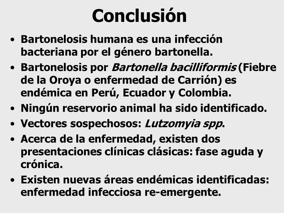 Conclusión Bartonelosis humana es una infección bacteriana por el género bartonella. Bartonelosis por Bartonella bacilliformis (Fiebre de la Oroya o e