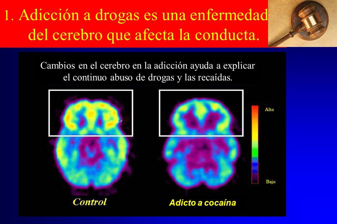 1. Adicción a drogas es una enfermedad del cerebro que afecta la conducta. Cambios en el cerebro en la adicción ayuda a explicar el continuo abuso de