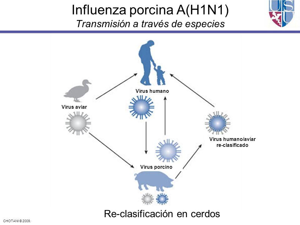 CHOTANI © 2009. Influenza porcina A(H1N1) Transmisión a través de especies Virus aviar Virus humano Virus porcino Virus humano/aviar re-clasificado Re