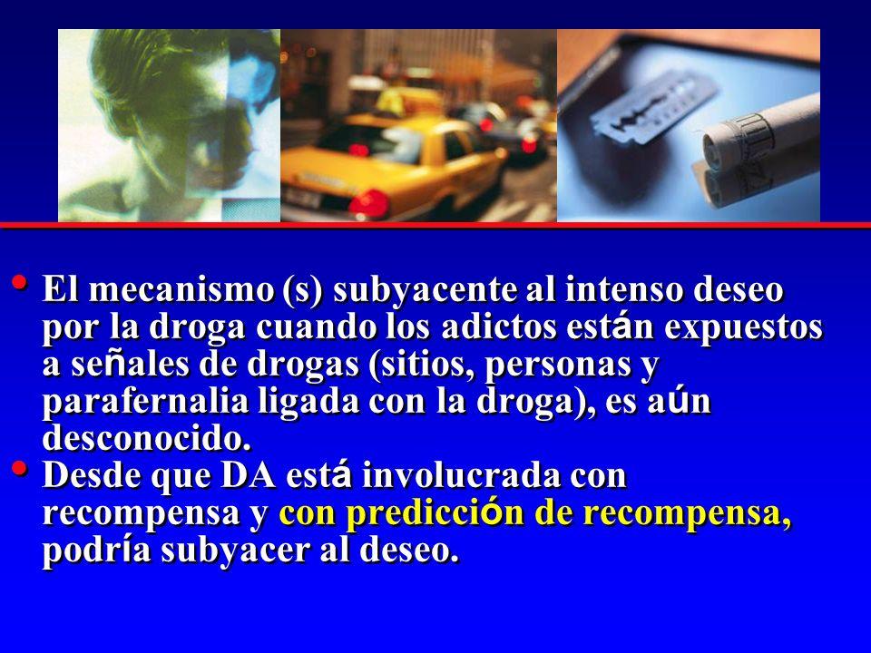 El mecanismo (s) subyacente al intenso deseo por la droga cuando los adictos est á n expuestos a se ñ ales de drogas (sitios, personas y parafernalia ligada con la droga), es a ú n desconocido.