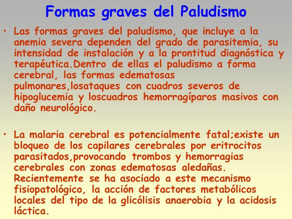 Formas graves del Paludismo Las formas graves del paludismo, que incluye a la anemia severa dependen del grado de parasitemia, su intensidad de instal