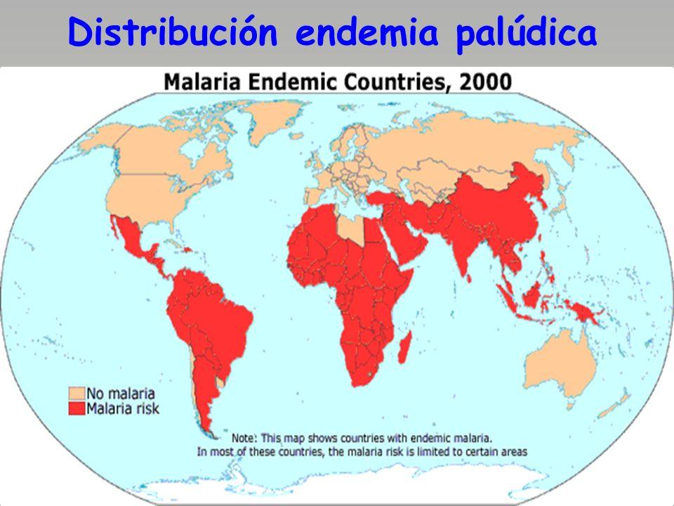 Formas ictérico-tumorales El complejo ictero-esplenomegalia existe en 1/3 de los niños con paludismo y se debe a la hemólisis presente; repetidos ataques palúdicos provocan la hipertrofia del bazo, lo que se conoce como esplenomegalia tropical, cuando se acompaña de daño nutricional, en las áreas endémicas.