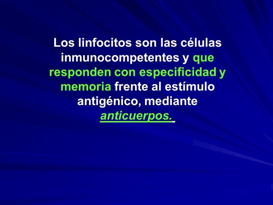 Los linfocitos son las células inmunocompetentes y que responden con especificidad y memoria frente al estímulo antigénico, mediante anticuerpos.