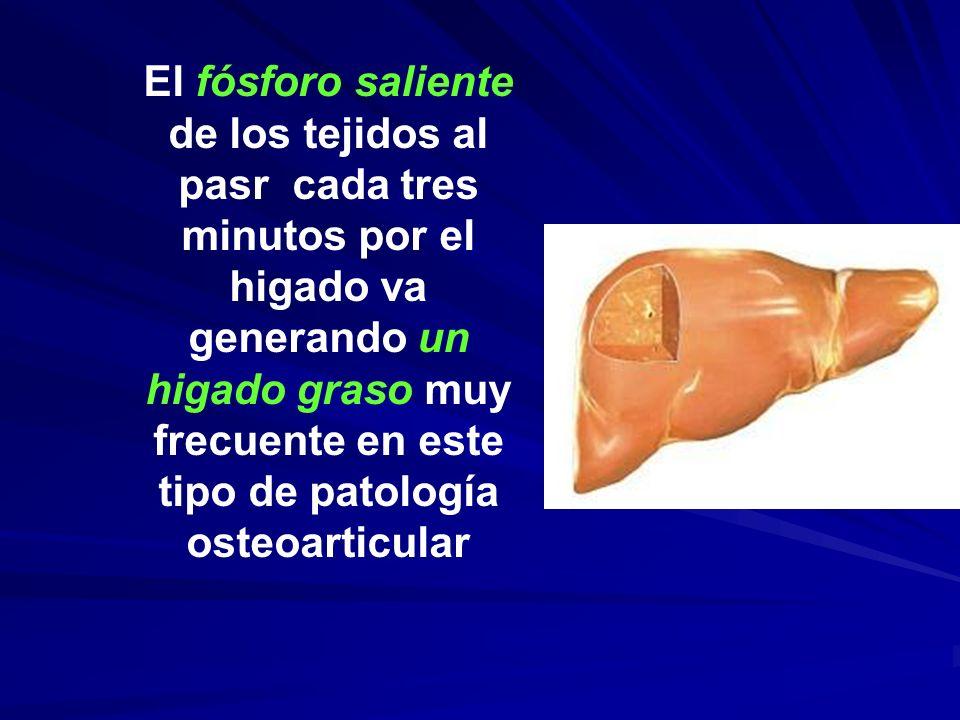 El fósforo saliente de los tejidos al pasr cada tres minutos por el higado va generando un higado graso muy frecuente en este tipo de patología osteoa