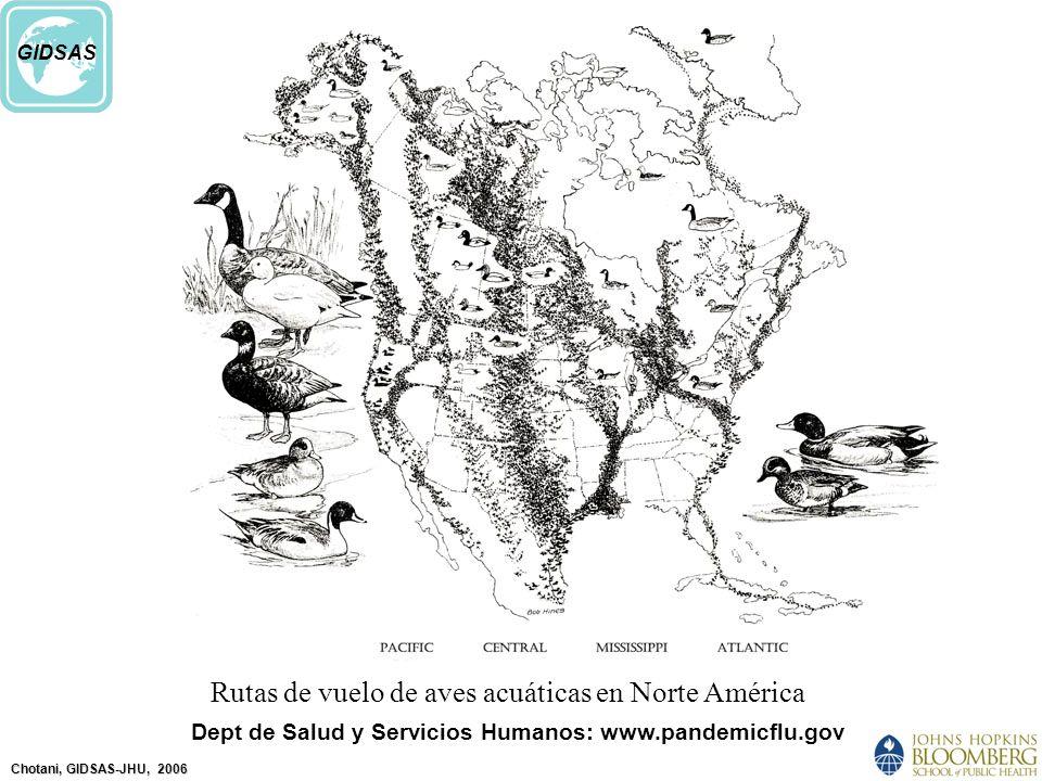 Chotani, GIDSAS-JHU, 2006 GIDSAS Dept de Salud y Servicios Humanos: www.pandemicflu.gov Rutas de vuelo de aves acuáticas en Norte América